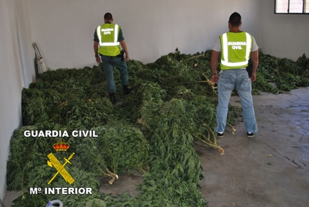 La guardia civil desmantela de forma simult nea dos plantaciones de marihuana - Plantaciones de marihuana interior ...