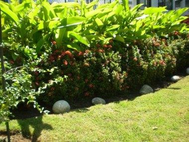 Diputaci n distribuye entre los ayuntamientos for Arbustos ornamentales
