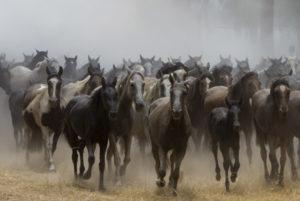 Este año se han sacado unos 1.100 animales. (Julián Pérez)