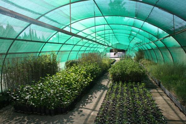 Agroa un misionero que elabora f bricas de plantas for Fabricacion de viveros