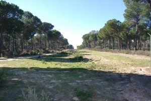 Zona por la que pasa actualmente un gaseoducto en la zona de Doñana.