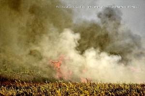 Incendio en la marisma situada entre La Antilla y El Terrón. (Carlos Pantamaría)