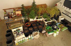 Marihuana aprehendida en Aljaraque.