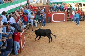 Una de las vaquillas trata de coger a los mozos en las capeas de San Juan.