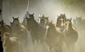 Una gran nube de polvo acompaña a la comitiva ganadera durante todo su recorrido. (Julián Pérez)