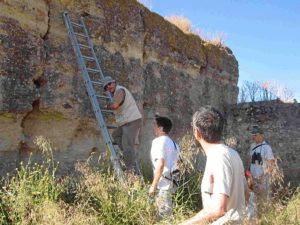 Grupo de anillamiento de primillas en la muralla de Tejeda.