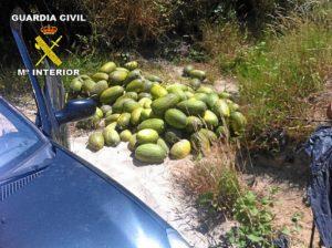 Algunos de los Melones y sandías robados.