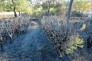 Incendio en Minas de Riotinto. (José Carlos Sánchez-Multimagenestudio)