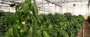 La agricultura ecológica cada vez gana más fuerza.
