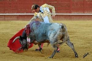 Sometiendo al toro. (Gilberto / ambitotoros)