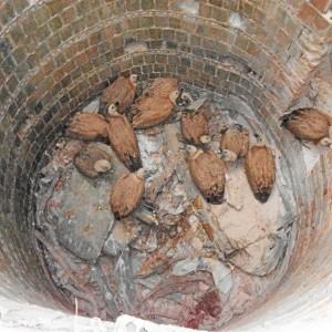 Buitres leonados atrapados en un pozo