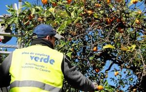 Recogidas naranajas - Plan Empleo Verde