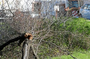 Árbol caído en Minas de Riotinto. (José Carlos Sánchez-Multimagenestudio)