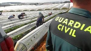 La Guardia Civil mantiene un dispositivo especial para evitar los robos en el campo.