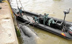 ballena Huelva-02