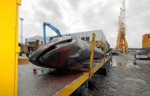 ballena Huelva-09