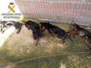 25-04-14 maltrato animales