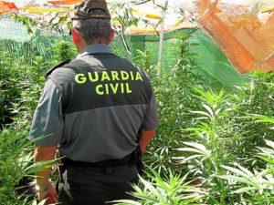21-08-14 marihuana