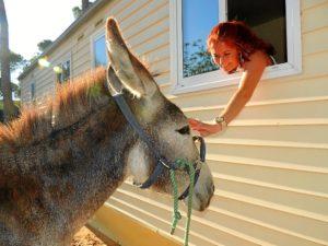 burros camping-168