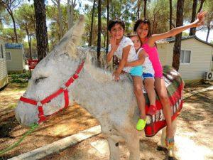 burros camping-9998