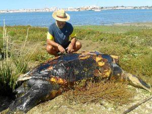 tortuga muerta isla canela-603_n
