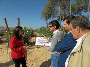 Visita Driscoll-s berries (2)