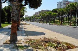 Jardines poda palmeras Avda Huelva. (2)