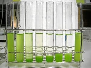 Algas floculadas