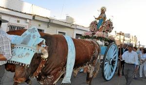 La imagen de la Virgen ha recorrido la barriada en una carreta tirada por bueyes