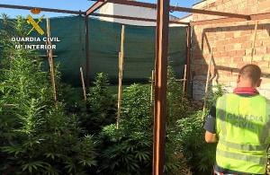 20150803_marihuana 2_ROSAL FRONTERA