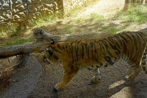 Zoo de Ayamonte (1)