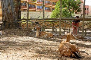 Zoo de Ayamonte (3)