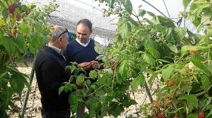 Frutas Borja Almonte