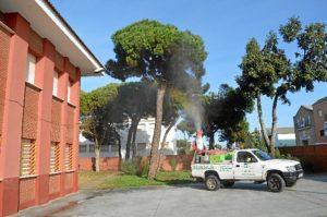 procesionaria Punta (1)