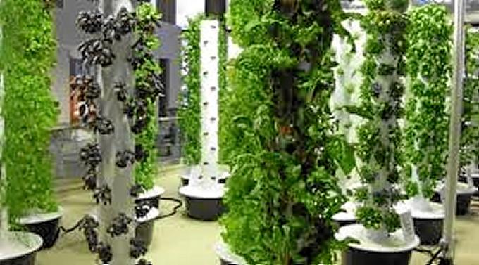 Pautas para tus cultivos verticales sean un xito for Cultivos verticales definicion