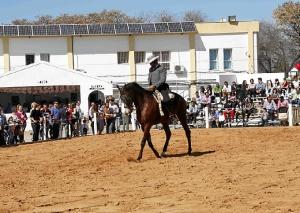 Feria del Caballo Cartaya (2)