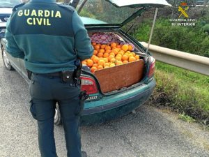 Robo naranjas Zalamea