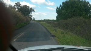 Camino de las Bodegas 3