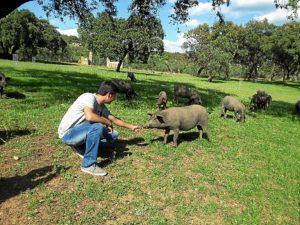 Ecuatorianos cerdo criollo3