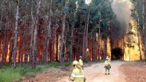 Incendio Fuente de la Corcha (Beas)