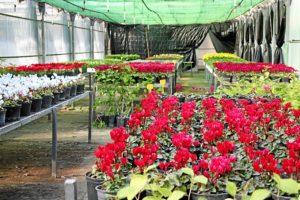 foto plantas1