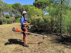 Trabajos forestales Valverde