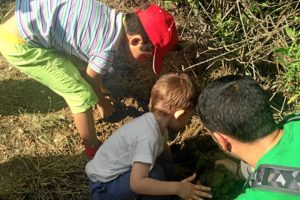 dia medio ambiente la laguna Ansares