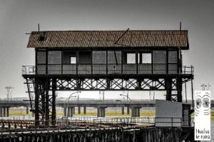 muelle tharsis