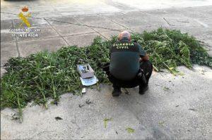 marihuana palma del condado