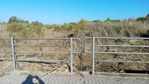 161210. El cauce del arroyo de La Dehesa sigue en estado de total abandono y los vecinos van a presentar quejas ante el Defensor del Pueblo