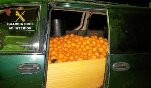 Robo de naranjas en Beas