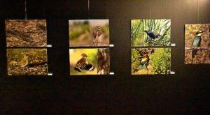 exposicion de avifauna2