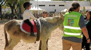 feria burro1