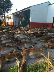 Animales abatido en la zona del incendio